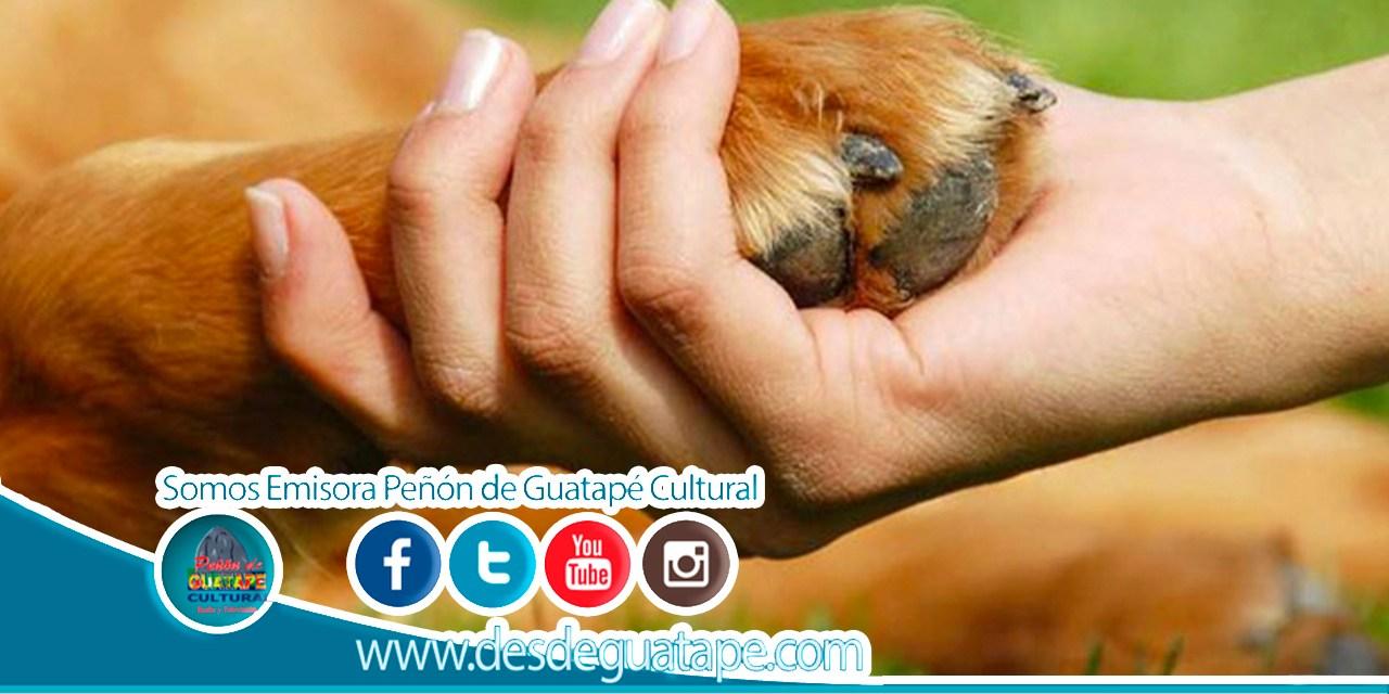 Invitación para los dueños de animales de manejo especial