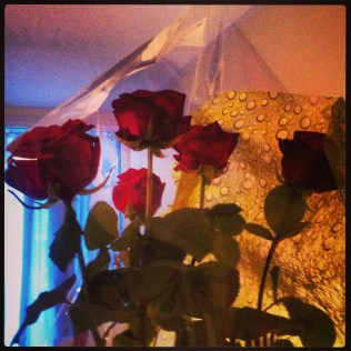 5 rosas por 5 años