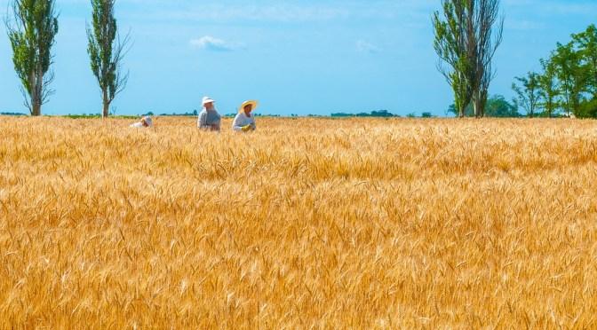 Biotecnologia: destaque para produção de alimentos em site da FAO