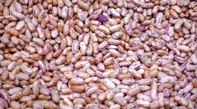 Feijão transgênico resistente a broca-das-vagens chega ao mercado
