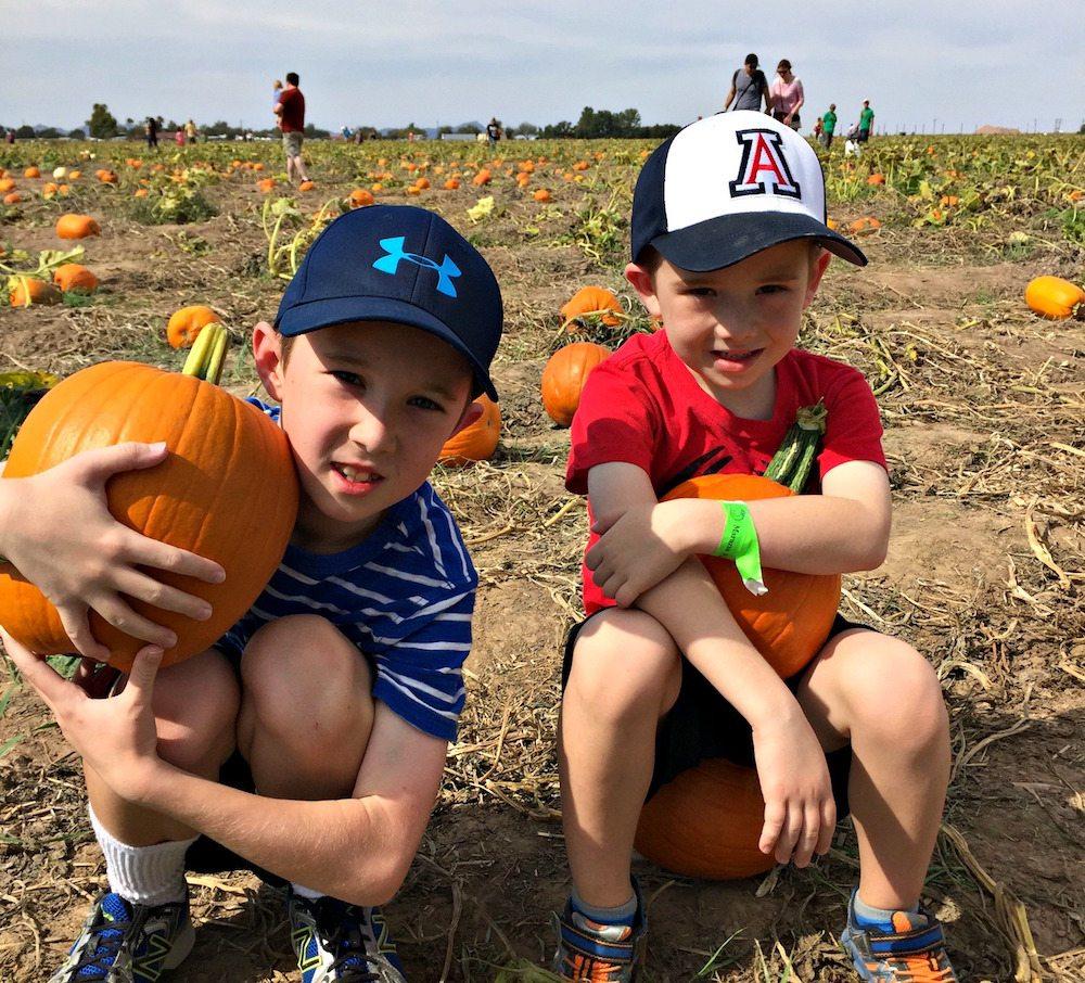 Marana Pumpkin Patch & Farm Festival