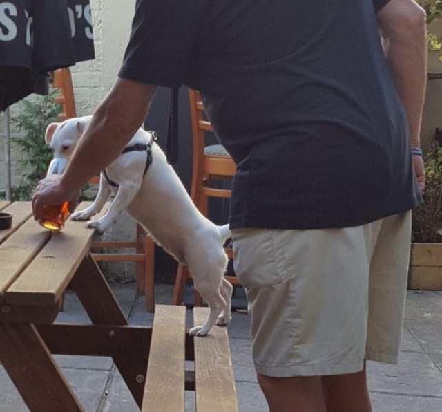 beer-dog-714x1024