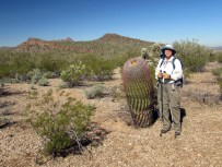 One really tall barrel cactus with hiker for scale.