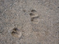 Traces of four legged friends.