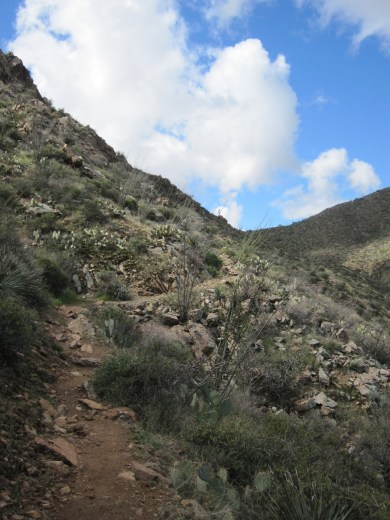 The trail leading to the saddle.