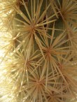 Bursts of needles cover the cholla.