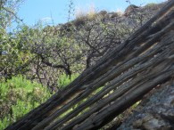 The ribs of a fallen saguaro frame the background hills.