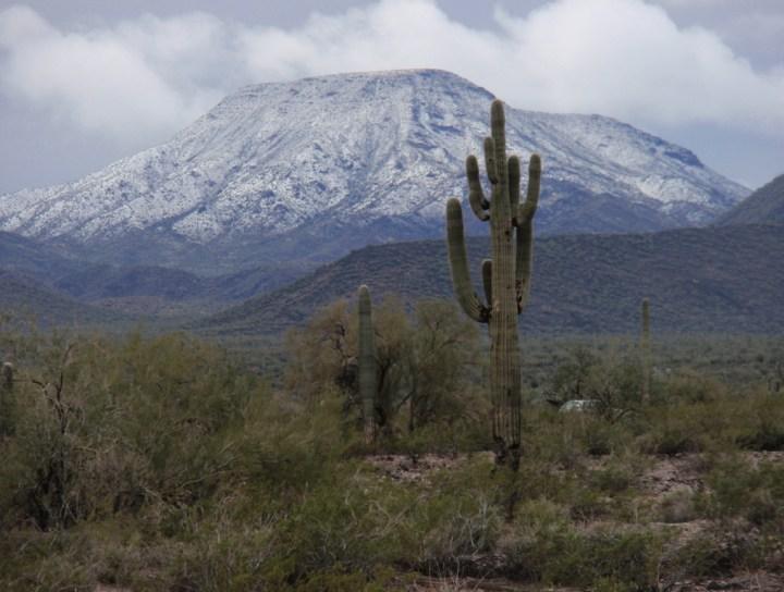Saguaros and tabletop mountain