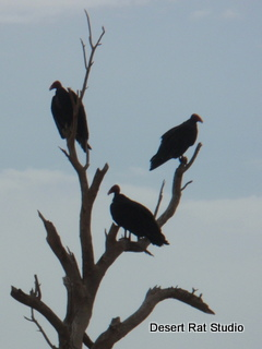 Turkey Vultures in Halloween Tree