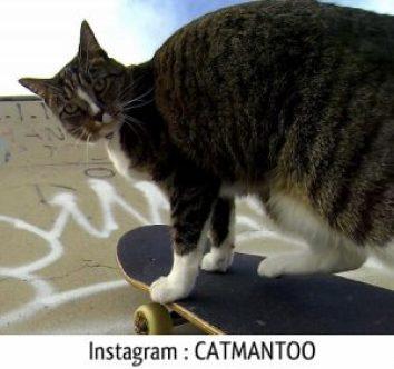 Didga chat skateur chat marrant rigolo