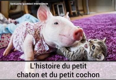 L'histoire du petit chaton et du petit cochon