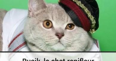 Rusik, le chat policier renifleur !