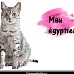 Le Mau égyptien ou chat des pharaons