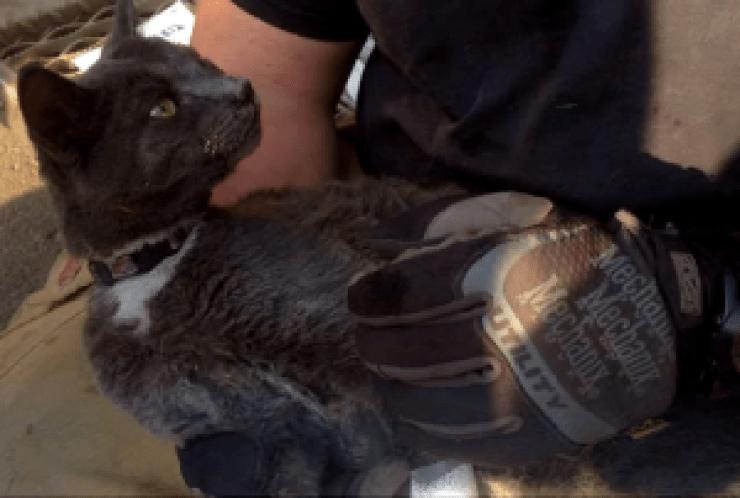 Tux le chat sauvé d'un incendie au canada caché four flamme fort mcmurray pompier chaton