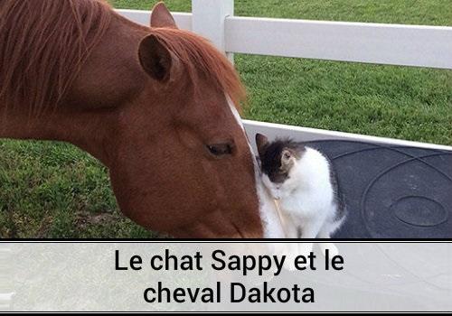 le chat sappy et le cheval dakota des hommes et des chats. Black Bedroom Furniture Sets. Home Design Ideas