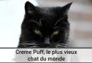 Creme Puff, le plus vieux chat du monde