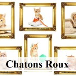10 images d'exception de chatons roux