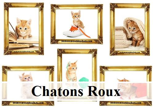 Photo Chat Image Chat Des Hommes Et Des Chatons Chat Foto