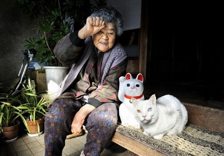 photo chat photo chaton belle image des hommes et des chatons petit chaton chatons mignons chat photo gratuit images de chatons images chatons chat mignon