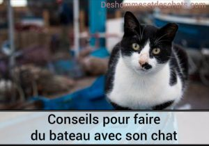 belle image chat drole chat marrant image comique image marrante foto de chat chaton mignon education du chaton voyage navigation maritime balade en bateau faire du bateau photo chat education chat education chaton eduquer un chaton education elever un chaton comment éduquer un chaton comment élever un chat
