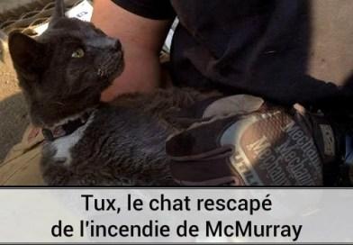 Tux, le chat rescapé de l'incendie de Fort Mcurray