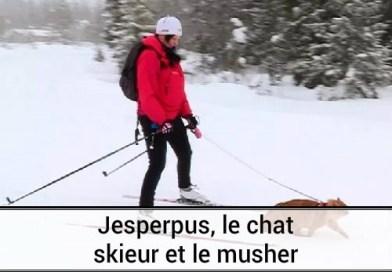 Le chat skieur prénommé Jesperpus et le musher