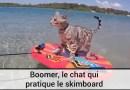 Boomer le chat qui pratique le Skimboard