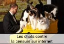 Les chats contre la censure sur Internet