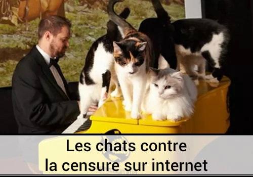 Des Hommes Et Chatons photo chat drole censure piano yamaha clavier piano occasion des