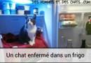 Maltraitance animale, un chat enfermé dans un frigo