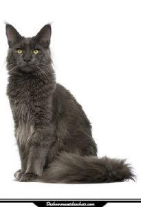 prix euthanasie chat 2016