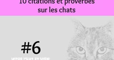 #6 – 10 citations et proverbes sur les chats