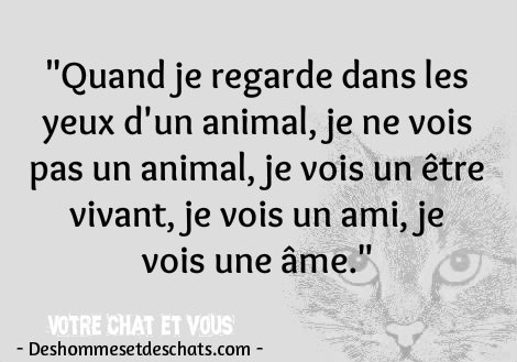 citation drole image animaux images citations courtes des belles