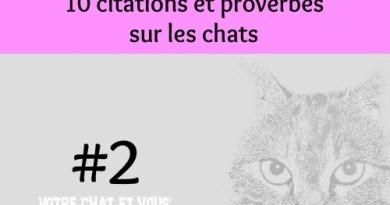 #2 – 10 citations et proverbes sur les chats