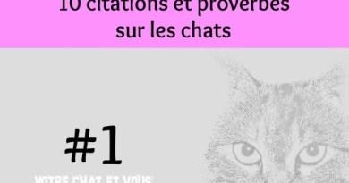 #1 – 10 citations et proverbes sur les chats