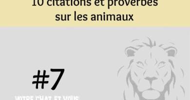 #7 – 10 citations et proverbes sur les animaux