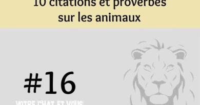 #16 – 10 citations et proverbes sur les animaux