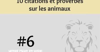 #6 – 10 citations et proverbes sur les animaux