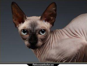 Bien qu\u0027issu de chats domestiques ordinaires, un des chatons avait comme  particularité, une quasi absence de fourrure. C\u0027est le gêne de la nudité  dit