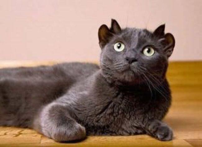 image-chat-des-hommes-et-des-chatons-wamiz-phot-chat-rigolo-images-chats-rigolos-chatons-mignons-photo-mignonne-foto-de-chat-comique-chat-mignon-chaton-trop-mignon