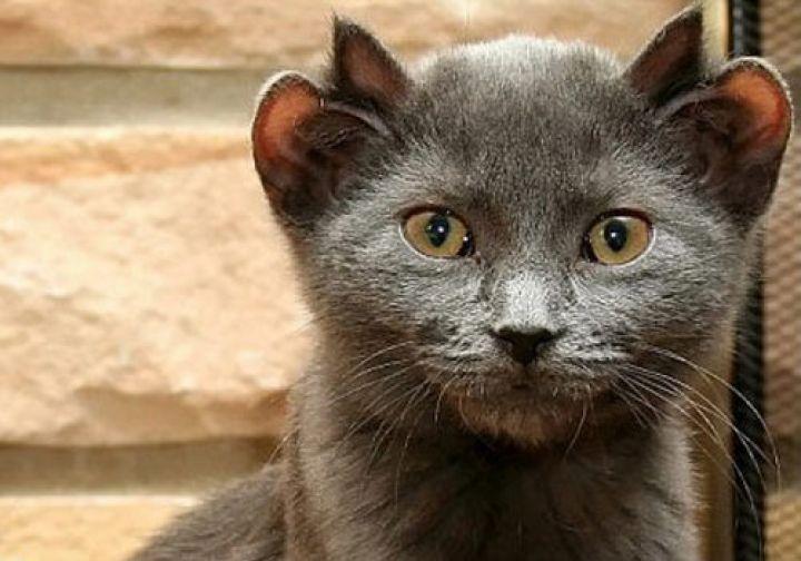 photo-drole-de-chat-image-de-chat-phot-de-chat-images-chatons-chaton-mignon-images-de-chatons-belle-photo-de-chat-image-du-chat-les-photos-de-chats-photo-de-petit-chaton-image-de-chat-gratuit