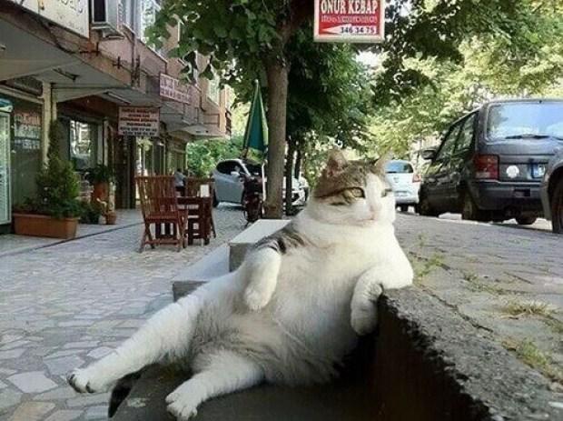 chat-tombili-cat-tombili-sculpture-chat-statue-de-chat-figurine-chat-statue-sculpture-metal-chat-image-photo-chat-photo-de-chat-marrant-chat-photo