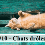 #10 – 10 photos de chats drôles