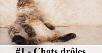 3 10 photos de chats de richard saunders des hommes - Chaton marrant ...