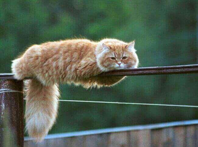 drole-de-chat-france-humour-chat-photo-chat -mignon-image-chaton-iamges-chatons-des-photos-de-chats-image-de-chat -photo-de-chat-photo-d-animaux-photos-de-chats-rigolos - Des hommes et des  chats