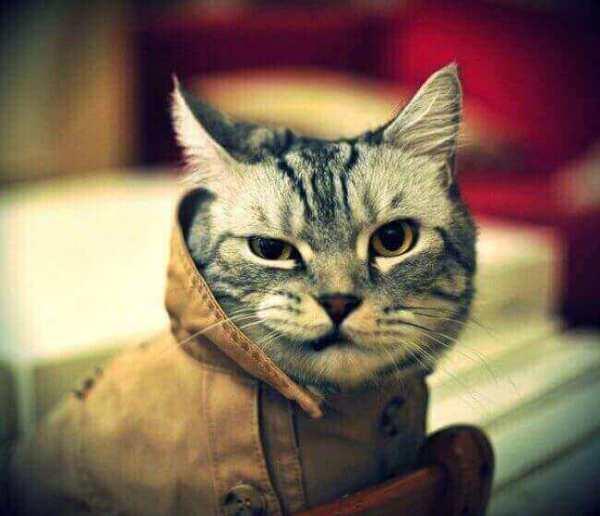 humour-chat-petit-chat-rigolo-chat-humoristique-drole-chat-rigolo-image-les-chats-les-plus-droles-photo-chat-drole-photo-chat-rigolo-les-chats-marrants-image-du-chat