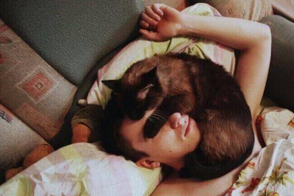 image-de-chaton-mignon-des-images-de-chat-chatons-mignons-photo-du-chat-chaton-photo-chat-marrant-chat-comique-chat-rigolo-chaton-mignon-chat-image