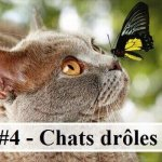 #4 – 10 photos de chats drôles