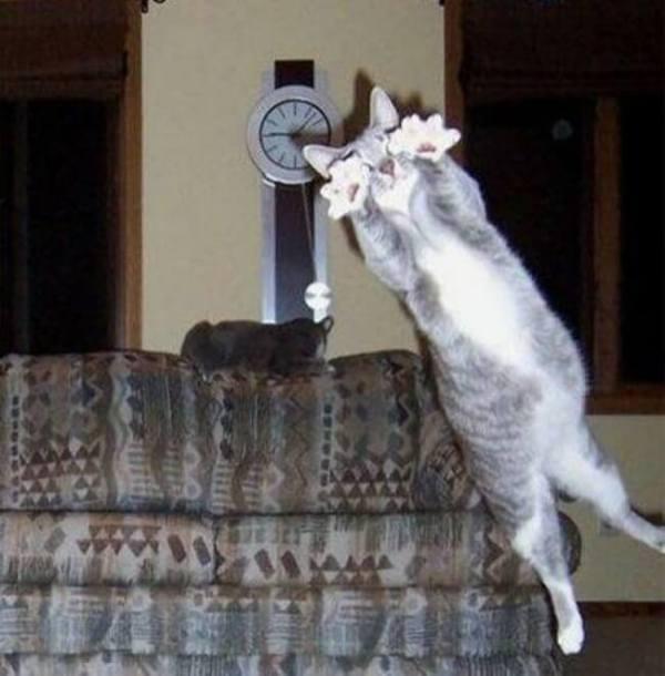 photo-chat-rigolo-photo-de-chaton-image-de-chat-rigolo-chat-comique-photo-animaux-photos-de-chats-rigolos-photo-de-chat-images-chatons-image-de-chat-humoristique