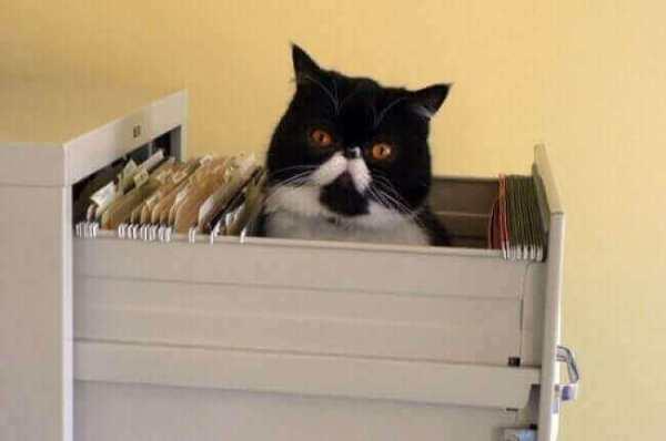 photo-de-chat-mignon-chat-drole-photo-animaux-photo-de-chaton-photo-mignonne-image-chaton-chat-rigolo-foto-de-chat-photo-de-chatons-petit-chat-mignon-chats-droles-chat-marrant